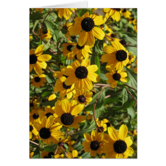(Even More) Black Eyed Susans at Longwood Gardens Greeting Card