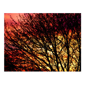 Evening Light Blank Notecard Postcard