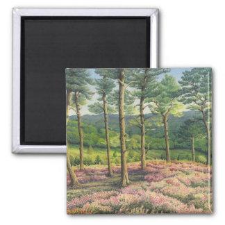 Evening Sun, Surrey Hills Pines in Pastel Square Magnet