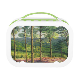 Evening Sun, Surrey Hills Pines Yubo Lunchbox