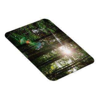 Evening Sunlight In A Forest Landscape Rectangle Magnet
