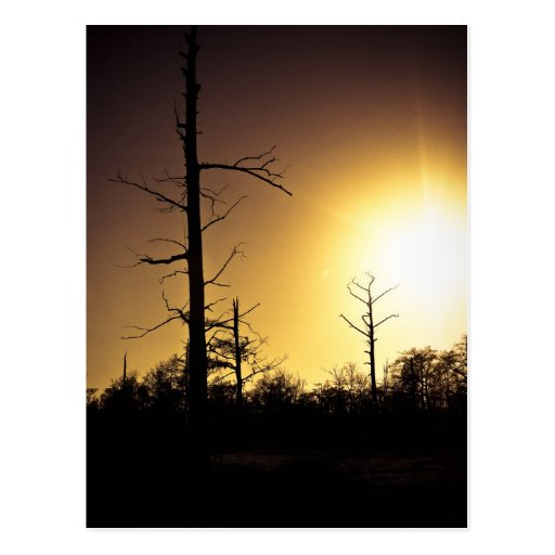 Evening Swamp Post Cards