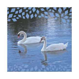 Evening Swans Canvas Print