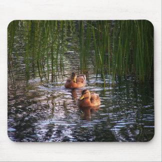 Evening Swim Mouse Pad