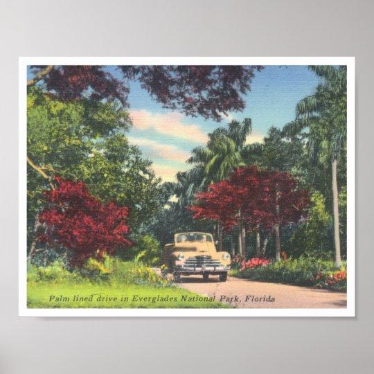 Everglades National Park Florida vintage photo Poster