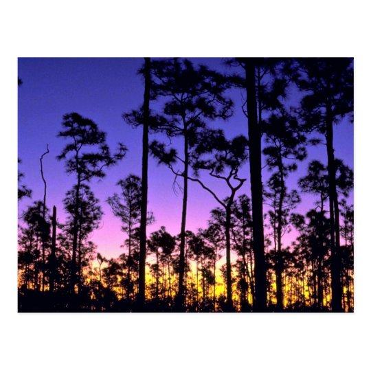Everglades National Park, Pinelands Area, Florida Postcard
