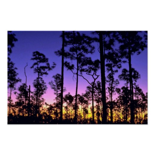 Everglades National Park, Pinelands Area, Florida Poster