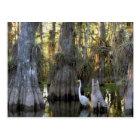 Everglades National Park Postcard