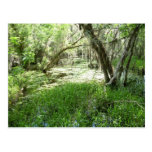 Everglades - swamp - marsh postcard