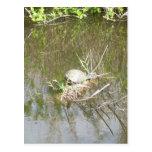 Everglades - tortoise postcard