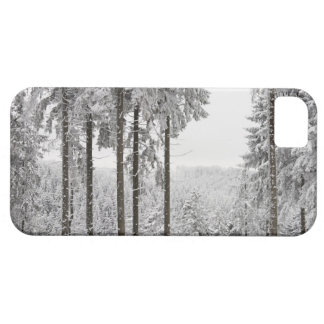 Evergreen forest in winter iPhone 5 cover
