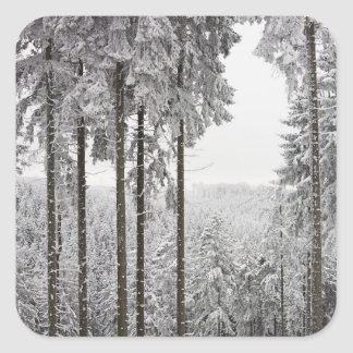 Evergreen forest in winter square sticker