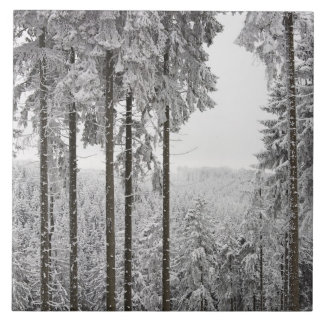 Evergreen forest in winter tile