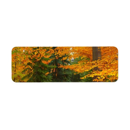 Evergreen Pines and Autumn Trees Return Address Label