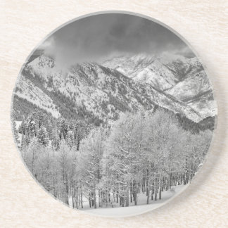 Evergreens and Aspen trees in a snow storm Coaster