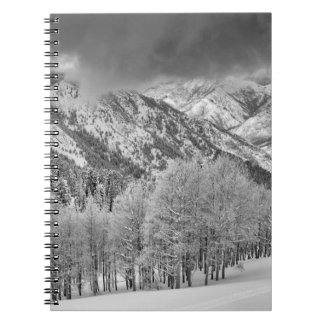 Evergreens and Aspen trees in a snow storm Notebooks