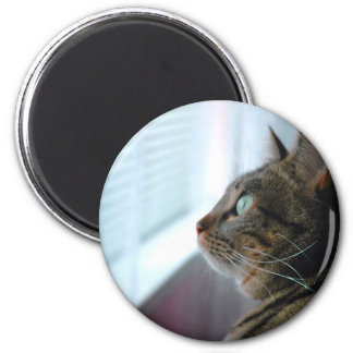 Evey the Kitty contemplates outside 6 Cm Round Magnet