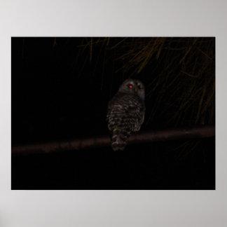 Evil Owl poster