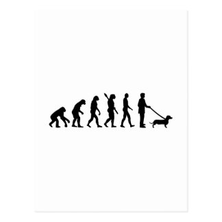 Evolution Dachshund Postcard