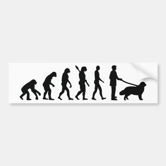 Evolution Newfoundland Bumper Sticker