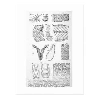 Evolution of dermal defenses art postcard