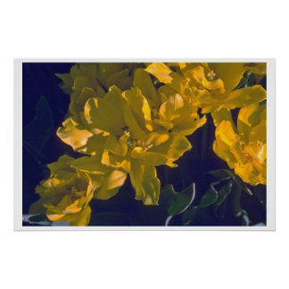 Excellent Color Combinations Of Nature Poster