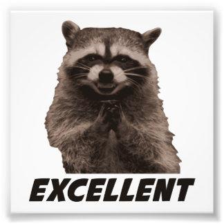 Excellent Evil Plotting Raccoon Photo Art