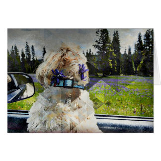 Excited Dog Car Ride Card