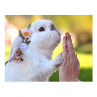 Exempel the bunny postcard