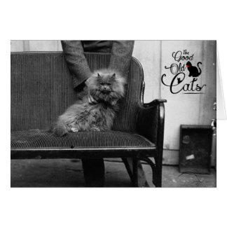 Exhibition Cat Club - Mondial 493 Card
