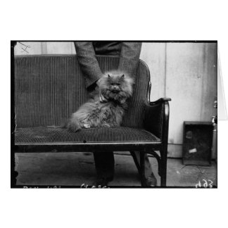 Exhibition Cat Club - Mondial 493 Greeting Card