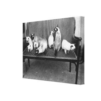 Exhibition Cat Club - Mondial 494 Canvas Print