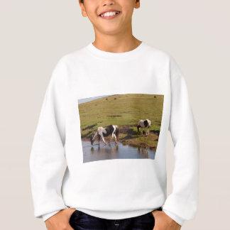 Exmoor Ponies Sweatshirt