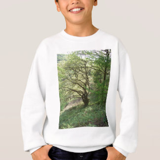 Exmoor tree 1 sweatshirt
