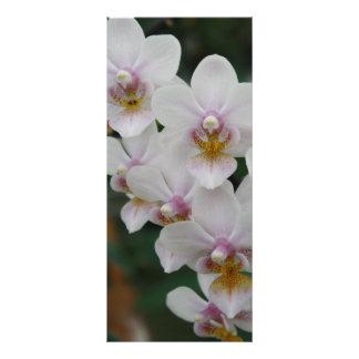 Exotic beauty - Phalaenopsis orchid Personalised Rack Card