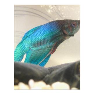 Exotic Betta Fish Closeup Flyer