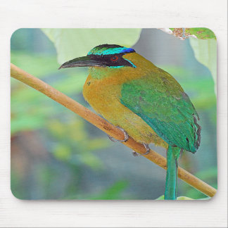Exotic Bird Mousepad