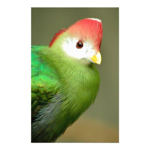 Exotic Bird Stationery