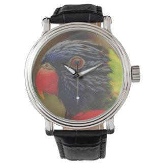 Exotic Bird Watch