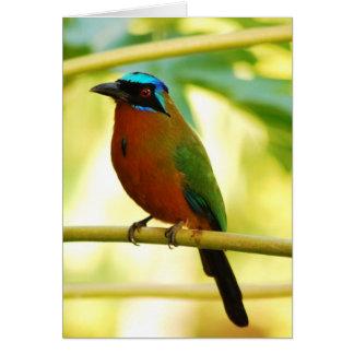 Exotic birds card