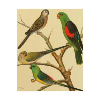 Exotic Birds Wood Wall Art Wood Canvases