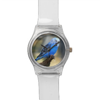 Exotic Budgie Bird Wrist Watches