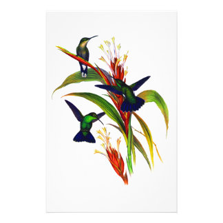 Exotic Colorful Hummingbirds Stationery Design