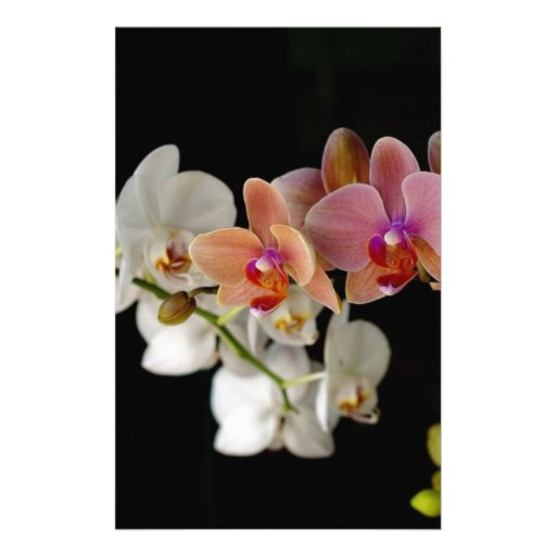 EXOTIC COLORFUL ORCHIDS STATIONERY