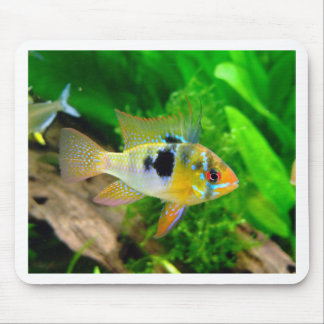 Exotic Fish Mousepads