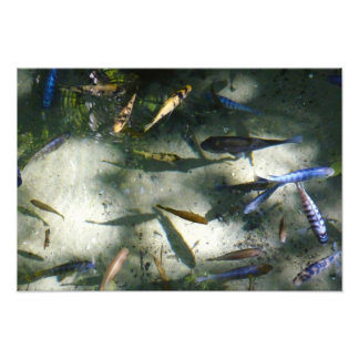 Exotic Fish Pond Colorful Animal Photography Photographic Print