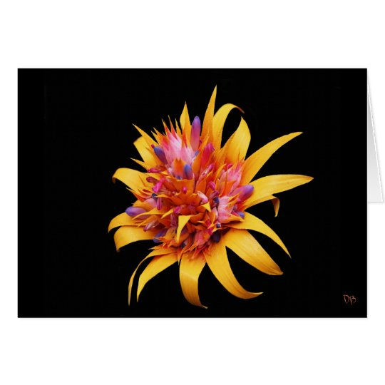 Exotic Floral Greeting Cards