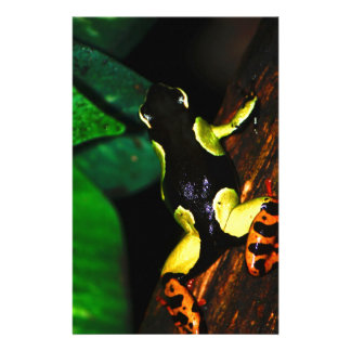 Exotic Frog Stationery Design