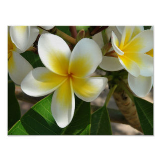Exotic Hawaiian Flowers Poster