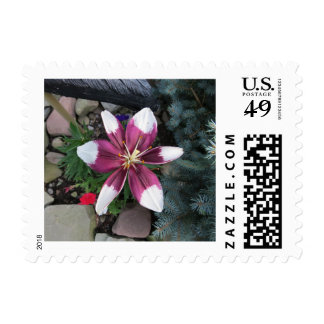 Exotic Lily Postage Stamp